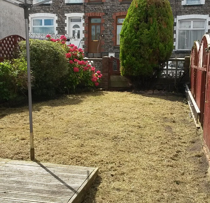 Lawn and tree maintenance